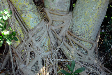 Wicked Roots