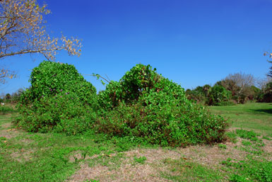 Vine Mounds
